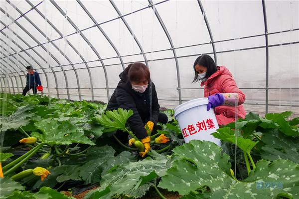 广饶县大王镇刘集后村:整合绿色财富 为村子振兴添砖加瓦